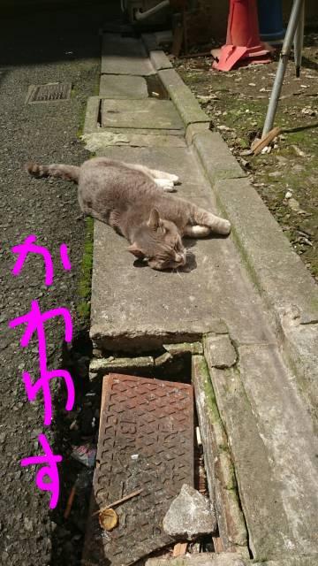 ネコちゃん発見(´・ω・`)