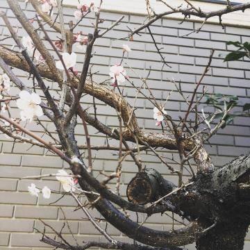 春を感じる。。(*´ー`*)